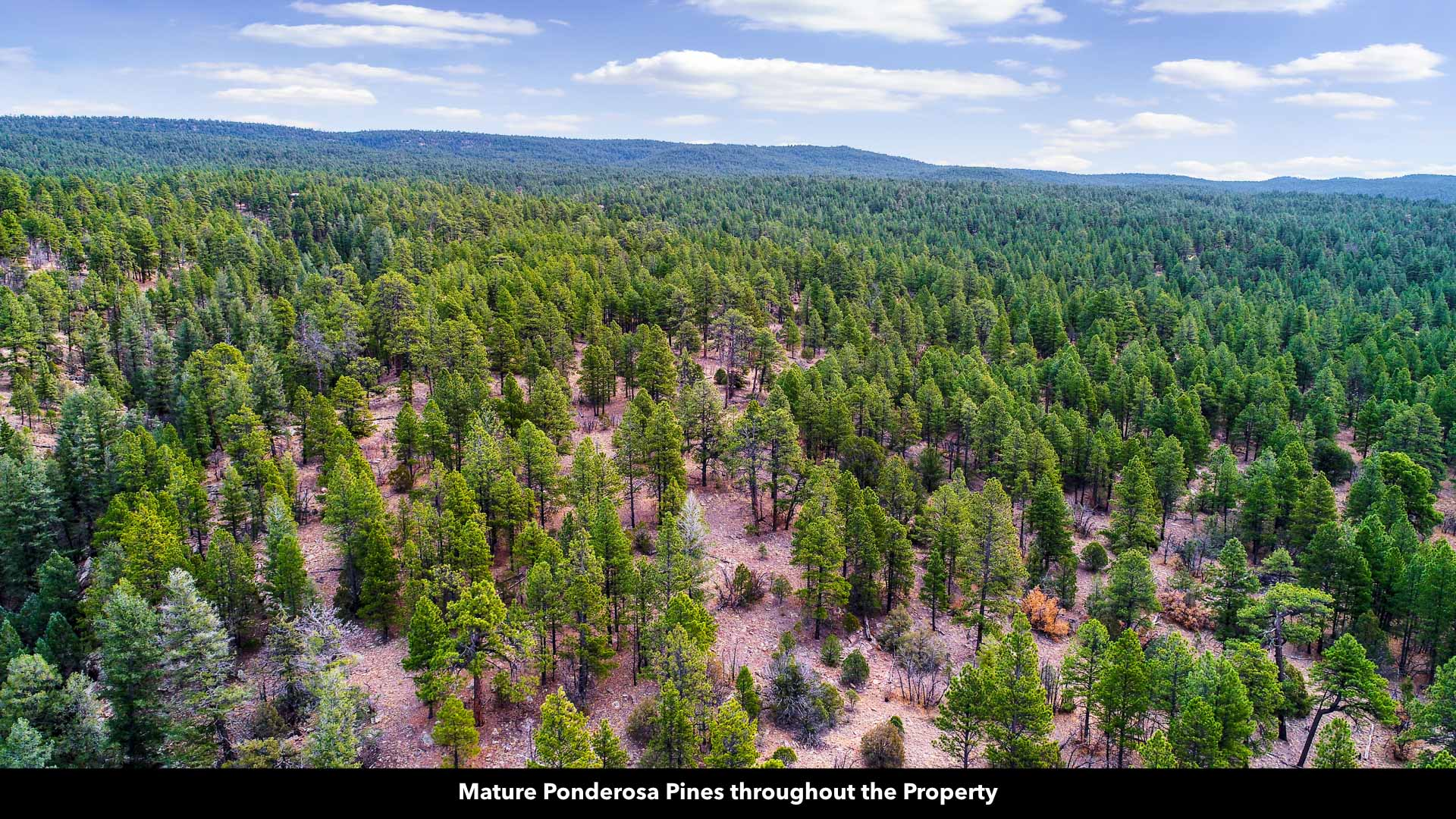 20 Wooded Mountain Acres of Land for Sale in New Mexico by